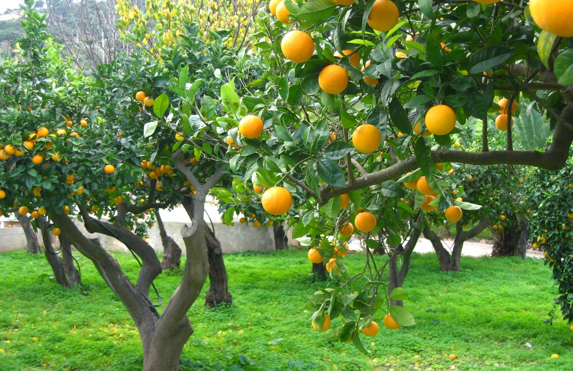 Sicilia copagri Sfondo 07